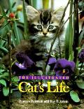 Illustrated Cats Life