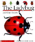 Ladybug & Other Insects First Discovery
