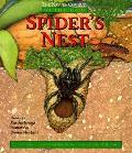 Spiders Nest Watch It Grow