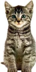 Kitten Animal Shaped Board Books
