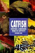 Catfish Keeping & Breeding Them In Capt