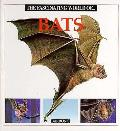 fascinating World of Bats