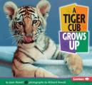 Tiger Cub Grows Up