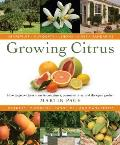 Growing Citrus The Essential Gardeners Guide