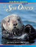 Raft of Sea Otters The Playful Life of a Furry Survivor