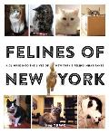 Felines of New York: A Glimpse Into the Lives of New Yorks Feline Inhabitants