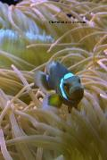 Clownfish and Anemone: (Website Password Organizer ) Never Worry about Forgetting Your Website Password or Login Again!