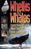 Whelks to Whales Coastal Marine Life of the Pacific Northwest