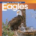 Welcome to the World of Eagles