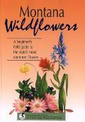 Montana Wildflowers A Beginners Field Guide To The