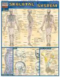 Skeletal System Laminate Reference Chart