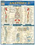 Anatomy 2 Laminate Reference Chart Includes Deep & Posterior Anatomy & Any New Structures
