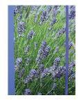 Lavender Blue Hardback Notebook