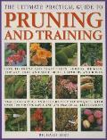 Ultimate Practical Guide to Pruning & Training