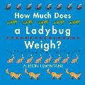 How Much Does a Ladybug Weigh
