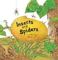 Insects & Spiders Insects & Spiders