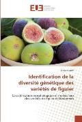 Identification de La Diversite Genetique Des Varietes de Figuier