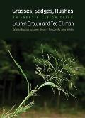 Grasses Sedges Rushes An Identification Guide
