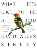 What Its Like to Be a Bird What Birds Are Doing & Why from Flying to Nesting Eating to Singing