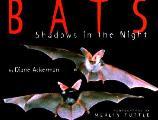 Bats Shadows In The Night