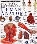 Visual Dictionary Of Human Anatomy