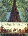 Ever-Living Tree