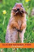 Glacier National Park Journal: Columbian Ground Squirrel