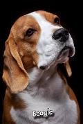 Beagle: 2020 Weekly Calendar 12 Months 107 pages 6 x 9 in. Planner Diary Organizer Agenda Appointment Half Spread Blank Pages