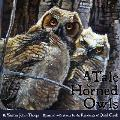 A Tale of Horned Owls