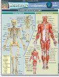 Anatomy Fundamentals Life Science Laminated Reference