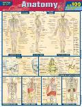 Anatomy Quizzer Laminated Reference