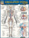 Circulatory System Advanced Laminated Reference