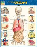 Anatomy of the Organs Laminated Reference