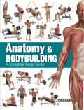 Anatomy & Bodybuilding A Complete Visual Guide
