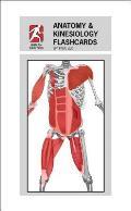 Anatomy & Kinesiology Flashcards