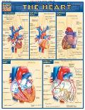 Heart Laminated Reference