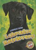 Labrador Retrievers Labrador Retrievers