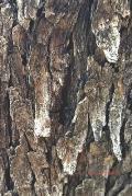 Journal: Mesquite Bark