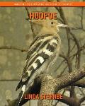 Hoopoe: Amazing Pictures and Facts About Hoopoe