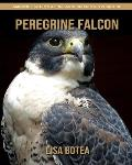 Peregrine Falcon: Amazing Pictures & Fun Facts on Animals in Nature