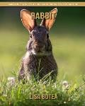 Rabbit: Amazing Pictures & Fun Facts on Animals in Nature