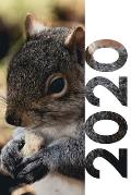 2020: Gifts for squirrel hunters Charming Planner Calendar Organizer Daily Weekly Monthly Student Diary for research on stoc