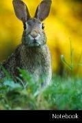 Notebook: Coniglio, Lepre, Animale, Riserva taccuino / agenda / quaderno delle annotazioni / diario / libro di scrittura / carne