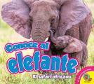 Conoce Al Elefante