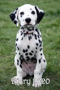 Diary: Dalmatian Puppy - Bespoke, personalised desk diary. Contact us if you would like your own image, name or other text on