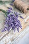 Notebear: Bundle of Lavender Flowers Journal - Alternate Lined and Blank Pages