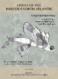 Order Beloniformes: Needlefishes, Sauries, Halfbeaks, and Flyingfishes