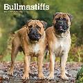 Bullmastiffs 2020 Square