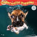 Underwater Puppies 2020 Square