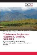 Tuberculos Andinos En Sugamuxi, Boyaca, Colombia